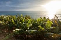 Atlantik & Früchte, Madeira, 2013 © by akkifoto.de