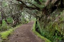 Levada do Risco, Madeira, 2013 © by akkifoto.de