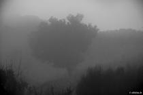 Wolken, Dunst und Schemen, Madeira, 2013 © by akkifoto.de