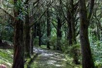 Queimadas, Levada Do Caldeirão Verde, Madeira, 04.03.2013 © by akkifoto.de