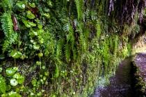 Levada Do Caldeirão Verde, Madeira, 04.03.2013 © by akkifoto.de