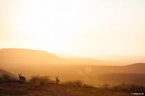Kudus nahe Grootberg Pass, Kunene, 14.10.2013 © by akkifoto.de