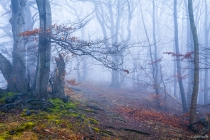 Nebelstimmung am kleinen Deister, Calenberger Bergland, 19.01.2014 © by akkifoto.de